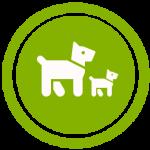 gestazione di cani