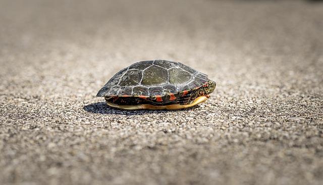 Quanto vive una tartaruga di terra quanti anni vivono for Tartarughe grandi