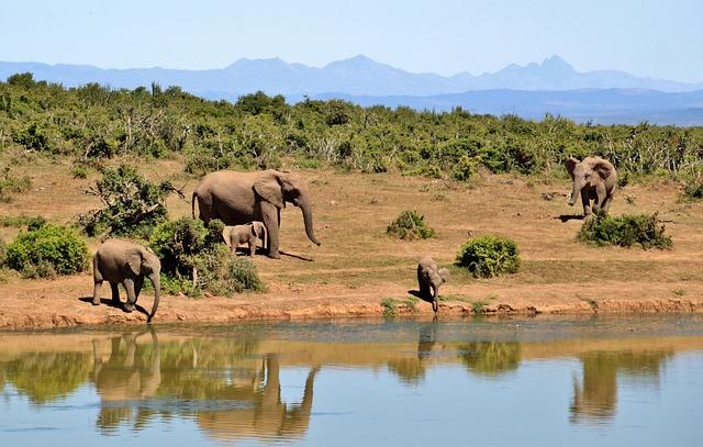 Quanti elefanti ci sono nel mondo quanti elefanti sono for Quanti deputati ci sono